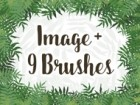 Brunch Brushes