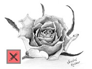 How to Draw a Rose with Pencil - Drawing Time Laps
